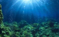 Cảnh báo sụt giảm oxy trong đại dương