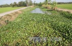 Thời tiết khô hạn, đồng bào Khmer chủ động thích ứng với hạn mặn