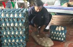 Người nuôi vịt rọ ở Đồng Tháp lao đao vì giá trứng giảm