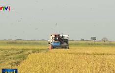 Ngân hàng Nhà nước đầu tư tín dụng phục vụ sản xuất nông nghiệp