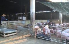 Đồng Nai sẽ áp dụng công nghệ blockchain trong quản lý chăn nuôi lợn