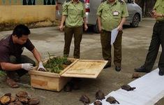 Phát hiện vụ vận chuyển lậu 29 cá thể rùa Sa Nhân quý hiếm