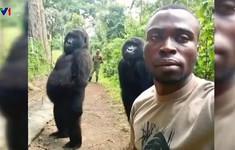 Khỉ đột selfie như người gây bão mạng xã hội