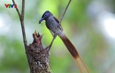Khám phá thiên nhiên ở vườn quốc gia Cát Tiên