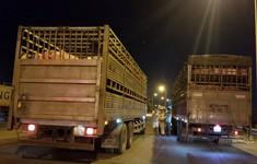 TP.HCM đề xuất lập thêm chốt kiểm dịch tả lợn châu Phi