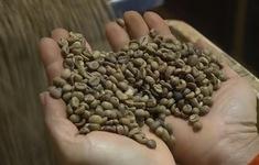 Giá cà phê giảm nhẹ