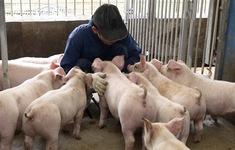 Các nước châu Âu làm gì để ngăn chặn dịch tả lợn châu Phi?