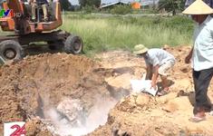 Đồng Nai chôn lợn bị bệnh dịch tả châu Phi ngay cạnh khu dân cư