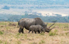 Sắp có trái phiếu bảo vệ động vật hoang dã