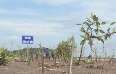 Cà Mau phát động trồng rừng ven biển