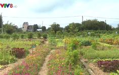 An Farm - Khu vườn vui vẻ