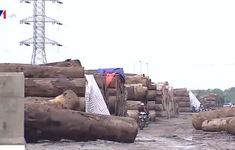 Bất chấp lệnh cưỡng chế, bãi gỗ trái phép vẫn ngang nhiên tồn tại