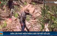 Đắk Lắk: Phát hiện thêm 5 bãi tập kết gỗ lậu quy mô lớn