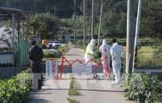 Hàn Quốc phát hiện trường hợp nhiễm virus tả lợn châu Phi đầu tiên