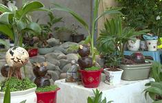 Độc đáo Bonsai dừa hình chuột đón Tết Canh Tý