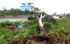 CẬP NHẬT Bão số 9 đổ bộ Quảng Ngãi, gió cấp 12, giật cấp 15, sóng biển cao từ 6-8 m
