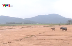 Hà Tĩnh: Người dân mất đất sản xuất do sạt lở