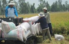Giá gạo xuất khẩu của Việt Nam tăng cao kỷ lục