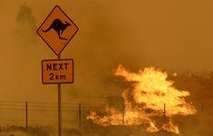 Nền nhiệt tăng cao tại nhiều khu vực, Australia đứng trước nguy cơ xảy ra các vụ cháy rừng