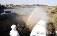 Phát hiện thêm ổ dịch cúm gia cầm H5N8 độc lực cao tại Hàn Quốc