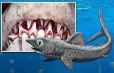 """Rùng rợn, phát hiện hàm răng """"quỷ dữ"""" của loài cá mập 370 triệu năm tuổi"""