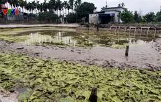 Khai quật khẩn cấp 13 cọc gỗ phát hiện tại Thủy Nguyên, Hải Phòng
