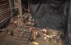 Khánh Hòa chủ động phòng ngừa dịch bệnh cho vật nuôi