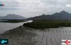 Hiệu quả chống hạn mặn từ đệm sinh thái rừng ngập mặn
