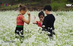 """""""Tan chảy"""" trước cánh đồng hoa cải trắng bạt ngàn ở Mộc Châu"""