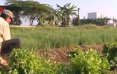 Chuyển đổi cơ cấu cây trồng mùa nắng hạn