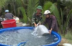 Mang nước ngọt về vùng hạn mặn Bến Tre