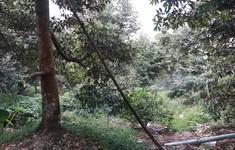 Tiền Giang hỗ trợ nước ngọt cho người trồng cây ăn trái