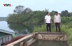 Xâm nhập mặn ảnh hưởng đời sống và sản xuất nông nghiệp ở Quảng Trị
