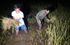"""Vỡ đập chứa nước, nông dân gặt đêm """"chạy"""" ngập"""