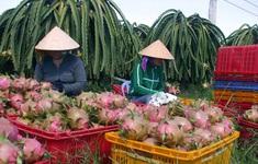 """Xuất khẩu rau quả giảm tại Trung Quốc, tăng """"khủng"""" ở các thị trường mới"""