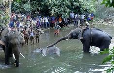 Bắt đối tượng giết voi bằng trái cây nhồi pháo ở Ấn Độ