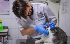 Italy cảnh báo virus gây bệnh dại hiếm gặp truyền từ loài mèo