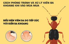 [INFOGRAPHIC] Mẹo phòng tránh và xử trí kiến ba khoang khi vào mùa mưa