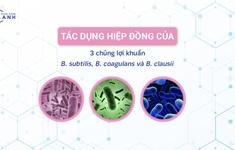 Sự thật về tác dụng của 3 chủng lợi khuẩn  Bacillus subtilis, Bacillus coagulans và Bacillus clausii