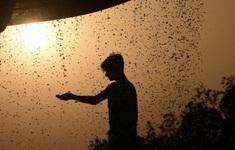 Nắng nóng cực độ gây tử vong cao hơn cả bệnh truyền nhiễm