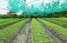 Sản xuất hữu cơ để chinh phục thị trường châu Âu
