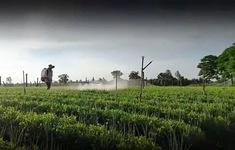 Thuốc bảo vệ thực vật đang bị lạm dụng quá đà
