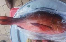 Bà Rịa - Vũng Tàu: 23 người ở nhập viện sau khi ăn cá hồng, đâu là nguyên nhân?