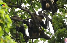 Cần bảo tồn đa dạng sinh học tại rừng Kon Plông