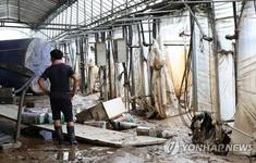 Mưa lớn tiếp tục gây thiệt hại tại Hàn Quốc, ít nhất 13 người thiệt mạng