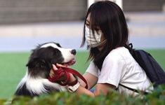 Nhật Bản phát hiện 2 trường hợp vật nuôi mắc COVID-19 đầu tiên