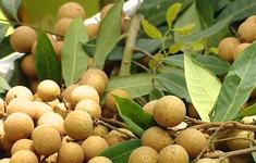Gỡ khó cho nông sản Việt Nam xuất khẩu Trung Quốc?