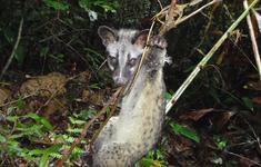 Bẫy thú đang khiến các khu rừng Việt Nam trở nên yên lặng