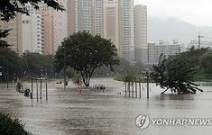 Hàn Quốc thiệt hại nặng nề vì mưa lũ kéo dài
