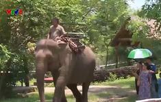 """Đắk Lắk: Xây dựng sản phẩm """"Du lịch thân thiện với voi"""""""